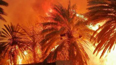 صورة حريق هائل يلتهم مزارع نخيل في السعودية