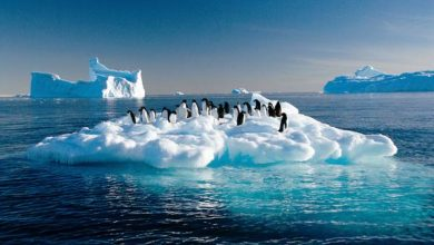"""صورة """"مدافع الثلوج"""".. حل مقترح لمواجهة ذوبان القطب الجنوبي"""