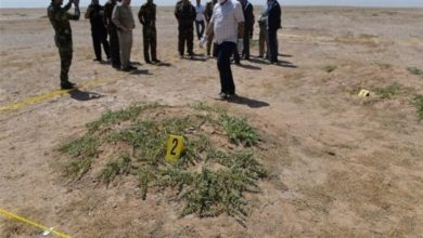 صورة العثور على مقبرة جماعية للرضع في كوت ديفوار
