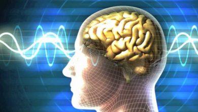 دراسة: معدل الذكاء العالمي يتراجع والبشر يتحولون لمجموعة من الأغبياء