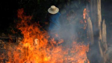 صورة إعلان الطوارئ شرقي أستراليا بسبب حرائق الغابات