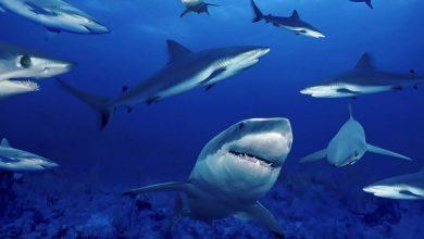 صورة الولايات المتحدة الأكثر تعرضًا لهجمات أسماك القرش