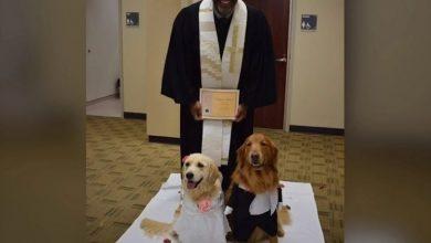 صورة شاهد.. مراسم زواج كاملة لكلبين في أمريكا