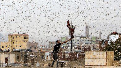 الحشرات والزواحف تهاجم عدة دول.. وأزمة جوع تهدد العالم