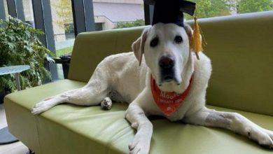 """صورة كلية """"فرجينيا ماريلاند"""" تمنح الدكتوراه الفخرية لـ""""كلب""""!"""