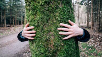 امرأة من تينيسى تعانق شجرة لمدة 10 ساعات وتدخل جينيس!