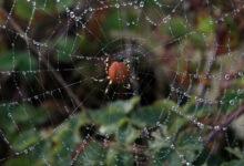 العثور على 3 عناكب سامة داخل مكتبة بجامعة ميشيجان!